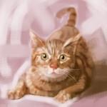Cat20100722_002