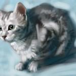 Cat_20100722_03