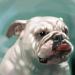 Dog_20100722_b01