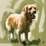 Dog_20100722_b04