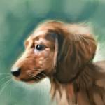 Dog_20100722_b06