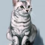 cat_20100725_02