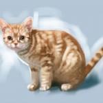 cat_20100725_04