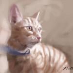 cat_20100725_07