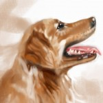 dog20100721_01