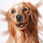 dog20100721_02