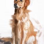 dog20100721_03