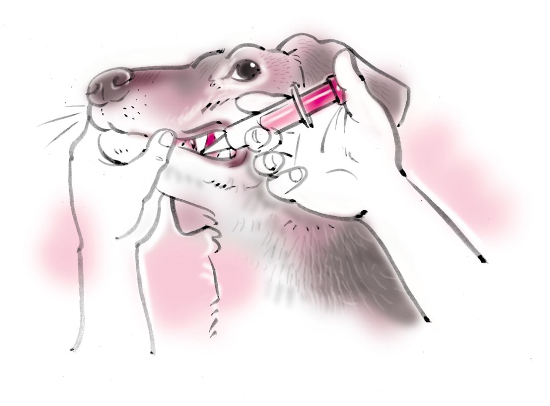 pet dog care_02