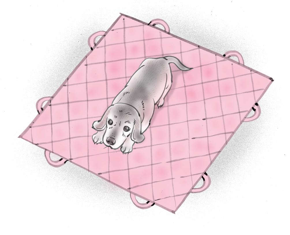 pet dog care_12