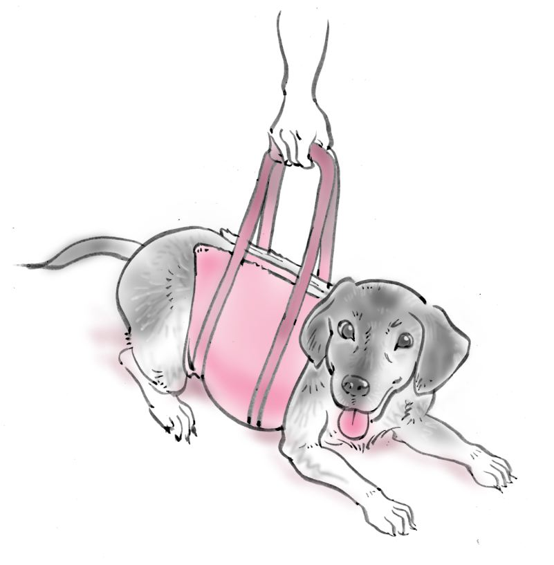 pet dog care_14