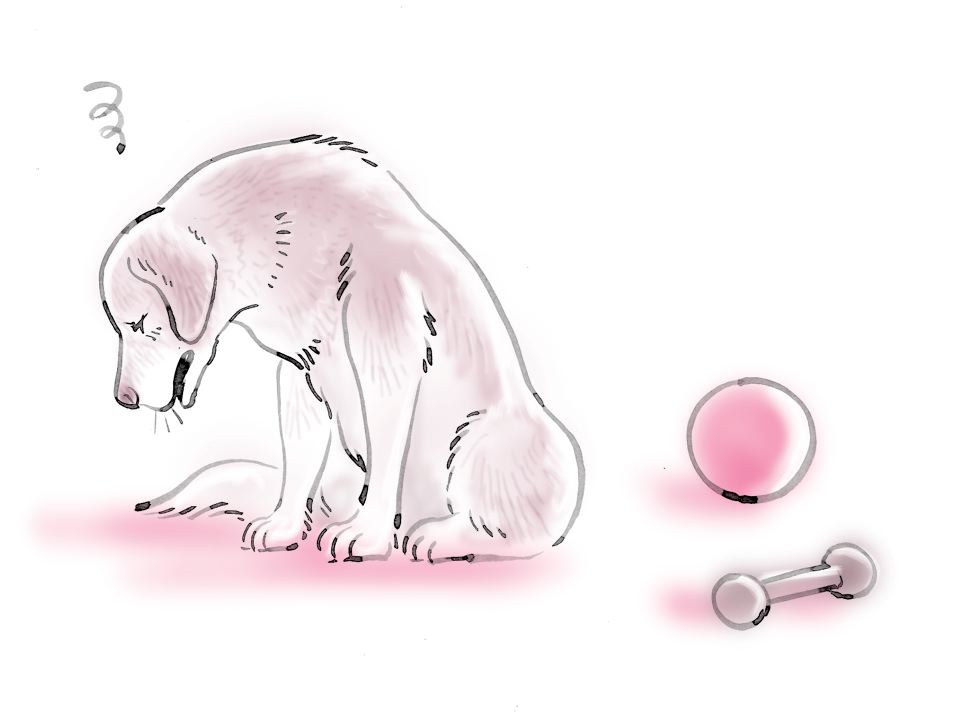pet dog care_20