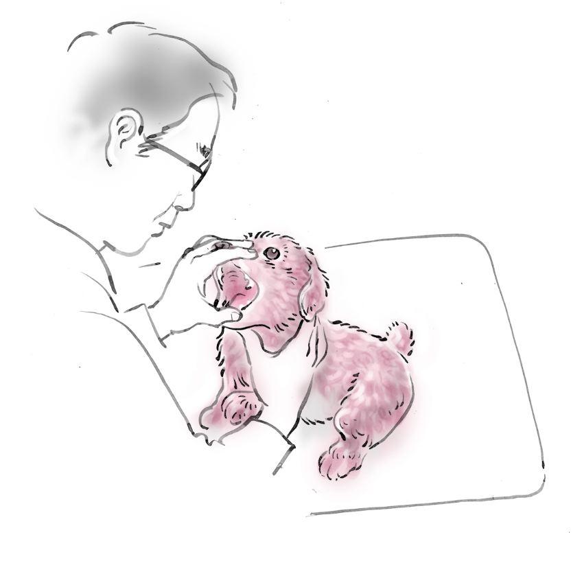 pet dog care_21