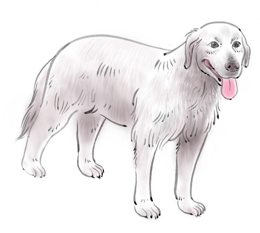 pet dog care_22