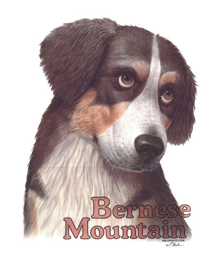 bernese mountain