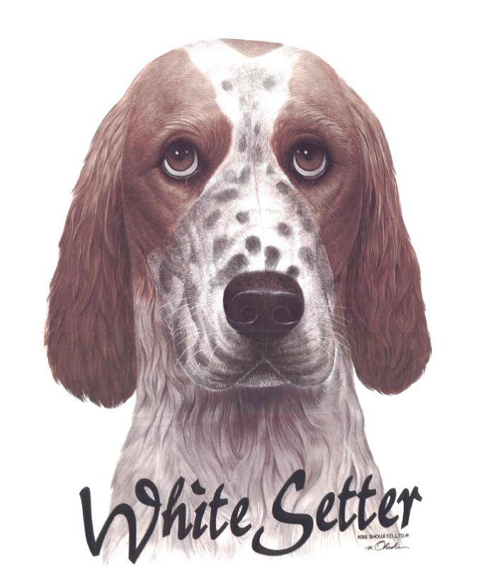 white setter