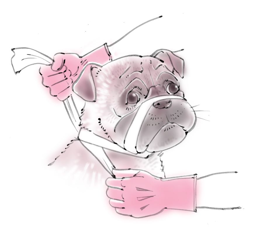 pet dog care_05