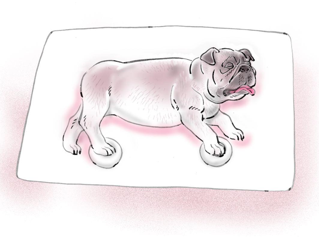 pet dog care_18