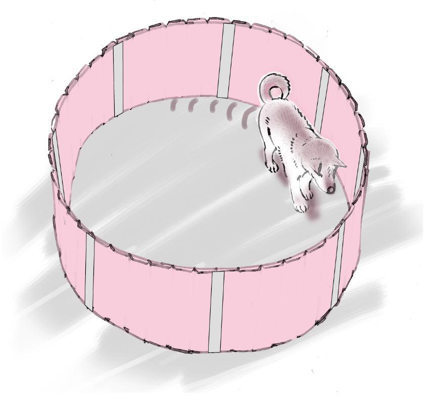 pet dog care_19